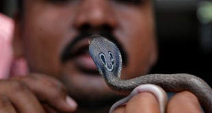 First-aid-for-snake-bites
